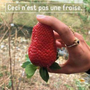 no fraise